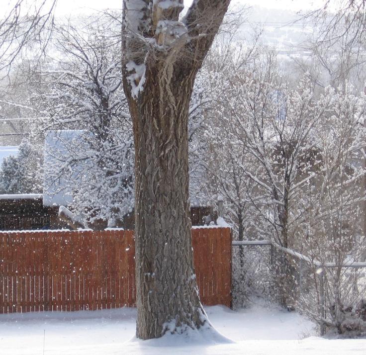 snowtree